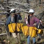 Research: restoring forests is theoretically enough to reverse global warming